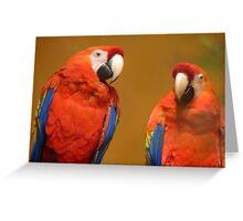We're A Ravishing Pair... Scarlet Macaws - Otago Greeting Card