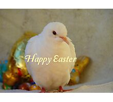 Easter Peace... - Happy Easter Dove - NZ Photographic Print