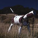 Cow Letter Box, Lindesay Highway, Queensland, Australia by muz2142