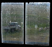 Shearing Shed Window by anthony1957