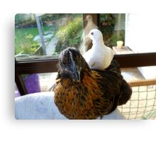 Who Said Dove's Can't Ride Side Saddle? - Dove & Chick - NZ Canvas Print