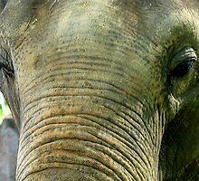 ELEPHANT TRUNK  SKIN   by SofiaYoushi
