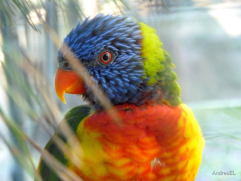 Do My Colours Influence Your Mood! - Rainbow Lorikeet - NZ by AndreaEL