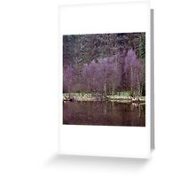 Birch trees, Ennerdale Greeting Card