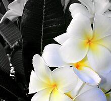 Frangipanii Flower by DanikaL