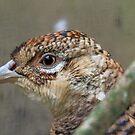 I See, Eye See You!! - Female Pheasant - NZ by AndreaEL