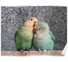 Excuse Me...This Is A Private Moment - Love Birds - NZ Poster