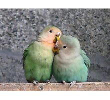 Excuse Me...This Is A Private Moment - Love Birds - NZ Photographic Print