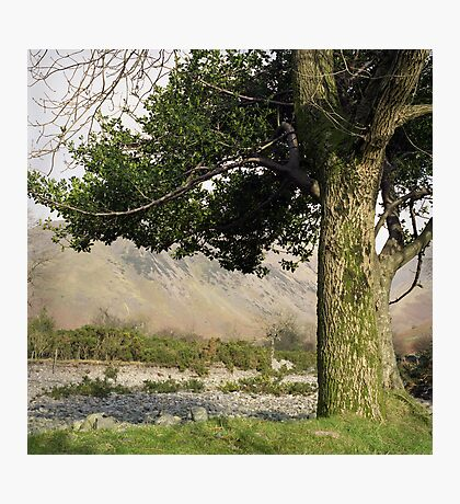 Holly Tree, Wasdale Photographic Print