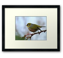 Oh.. Happy Days Are Here Again - Silver-Eye - NZ Framed Print