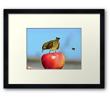 Yikes!!! He's Making A BEEline for My BEEhind! - Silver-Eye - NZ Framed Print