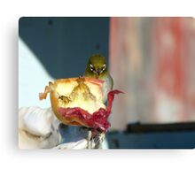Aww..Wee!!! Your'e An Unwelcome Guest On My Apple! - Silver-Eye - NZ Canvas Print
