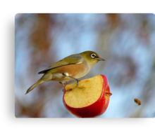 Look OUT..Silly Bee.. This Apple's Got No Brakes!!! -Silver-Eye - NZ Canvas Print