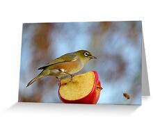 Look OUT..Silly Bee.. This Apple's Got No Brakes!!! -Silver-Eye - NZ Greeting Card