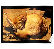 Sleeping fennec Poster