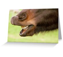 """Don't Look A Gift Horse In The Mouth"" - NZ Greeting Card"
