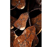 Metal leaves Photographic Print