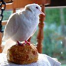 Bun!!!... What Bun? - White Dove - NZ by AndreaEL