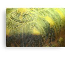 Shell Canvas Print