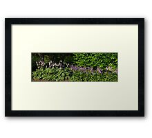 HDR Composite - Pink and Purple Flower Beds Framed Print
