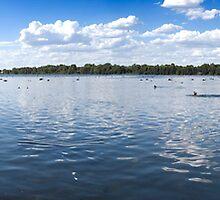 Herdsman Lake Swans by palmerphoto