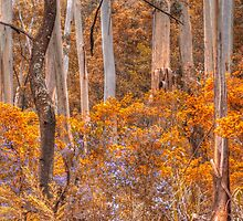 Experiments In Processing -  Mt Wilson - The HDR Experience by Philip Johnson