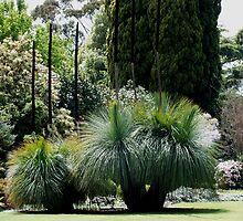 Flowing Grass Trees Australia by Sandra  Sengstock-Miller