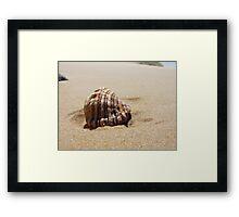 Croajingolong National Park - Shell Framed Print