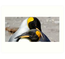 King Penguin couple Art Print