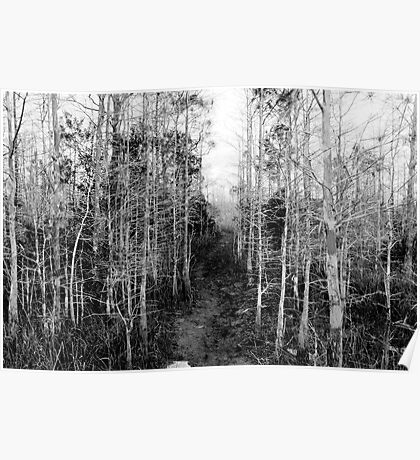 Florida Trail, in Big Cypress. Poster