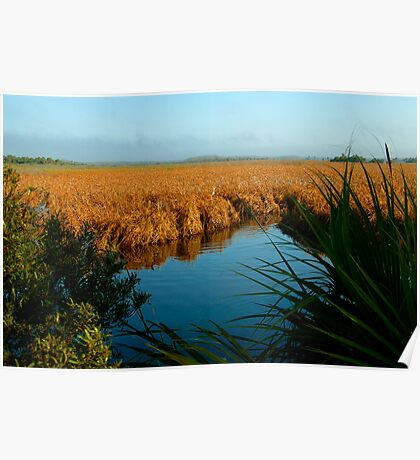 """Everglades Morning"" Poster"
