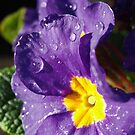 Purple Rain by Mark Wilson
