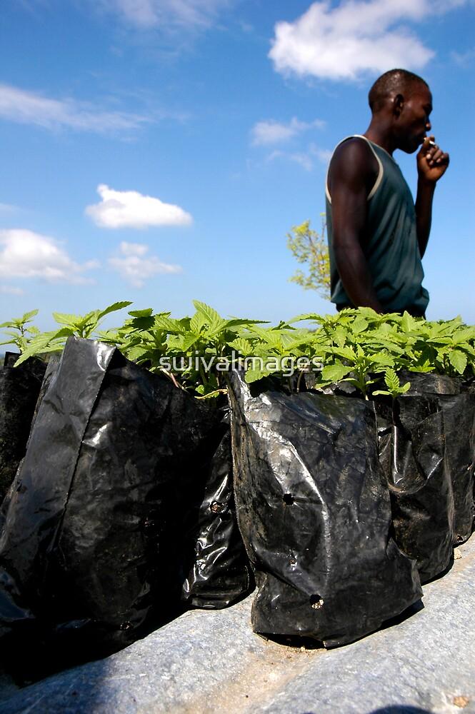 Jamaican Ganja Fields by swivalimages