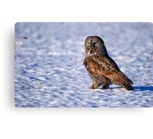 Great Grey Owl - Dunrobin Ontario Canvas Print