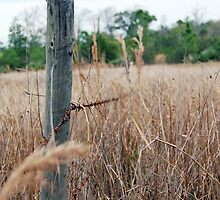 Fence line. by Mark Weaver