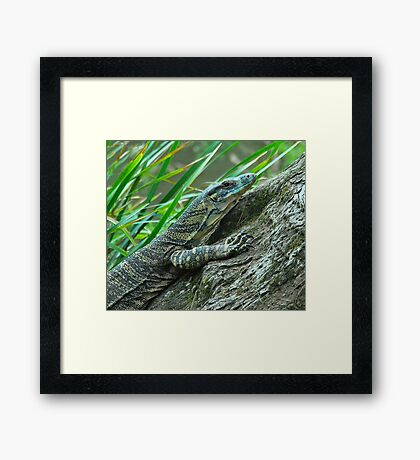 Goanna in Profile Framed Print