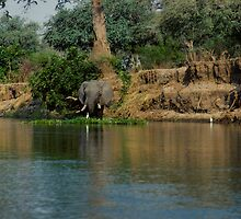 Elephant and Egret by bertspix