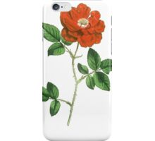 Vintage Red Rose Isolated on White iPhone Case/Skin
