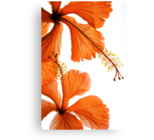 Hibiscus Falling Canvas Print