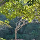 morning light in the jungle - luz de la mañana en la selva by Bernhard Matejka