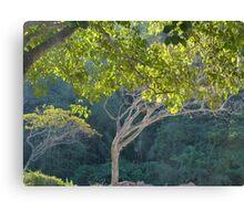 morning light in the jungle - luz de la mañana en la selva Canvas Print