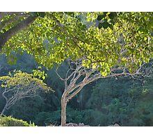 morning light in the jungle - luz de la mañana en la selva Photographic Print