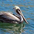 Wonderful bird is the pelican...... by Nancy Richard