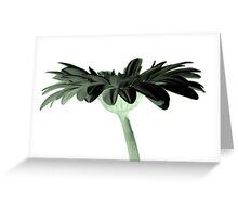 Under the Gerbera - Green Greeting Card