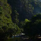morning light in the jungle II - luz de la mañana en la selva by Bernhard Matejka