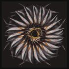 """Feathered Flower © Brad Michael Moore 2008"" by Brad Michael Moore"