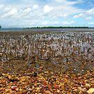 Rocky Beach by gracelouise