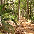bush track by Chris Parker