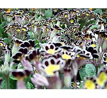 Spring greetings  Photographic Print