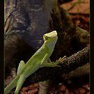 Lizard by Rowan  Lewgalon